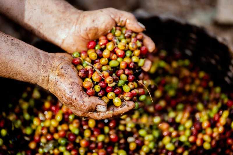 café de origen peruano